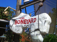 Walt Disney World's Animal Kingdom - The Boneyard