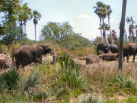 Walt Disney World's Animal Kingdom - Kilimanjaro Safaris