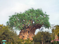 Walt Disney World's Animal Kingdom - The Tree of Life